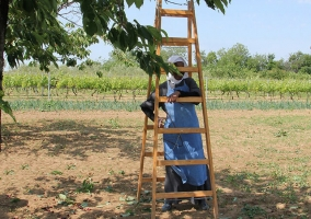 Poljoprivredno gospodarstvo 07