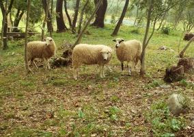 Poljoprivredno gospodarstvo 11